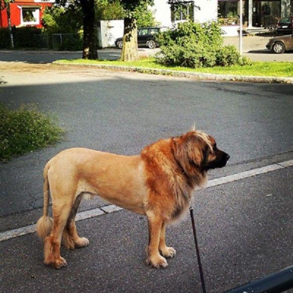 犬に見えない犬5