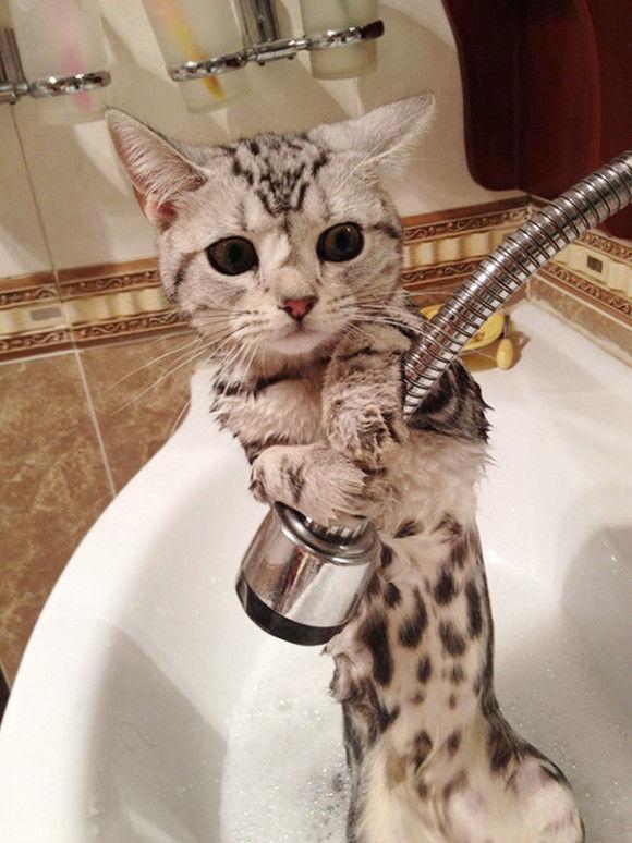 入浴中の動物10