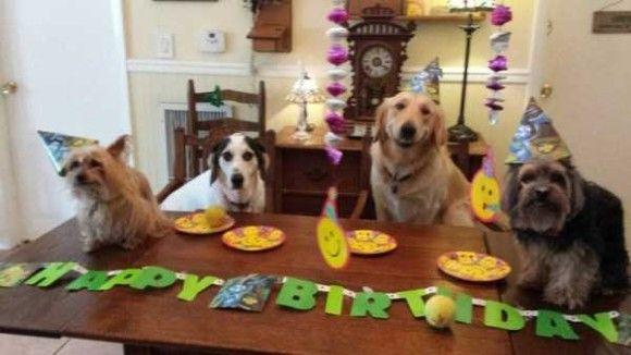 誕生日を祝ってくれるペット画像1