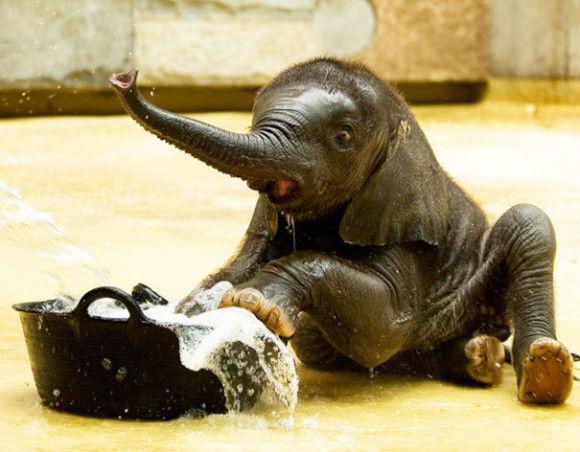 入浴中の動物3