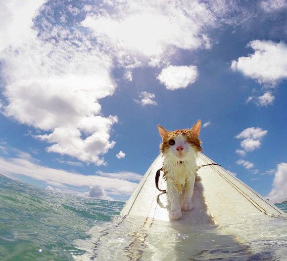 波乗り猫2