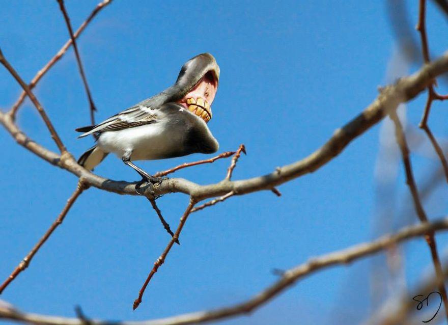 体の半分が口の鳥4