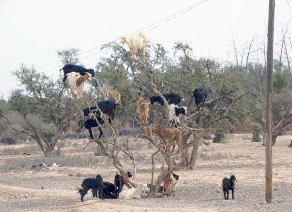 アフリカの日常光景15