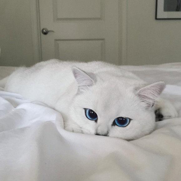 ブルーウォーターのような瞳のネコ4