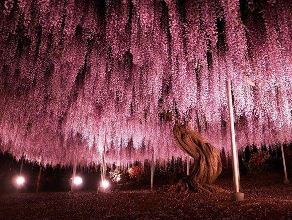 地球上でもっとも凄い木3