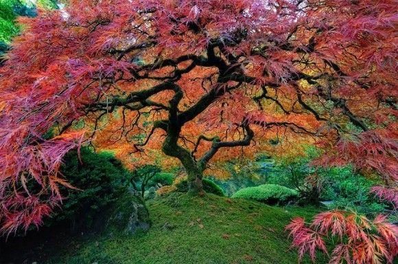 地球上でもっとも凄い木5