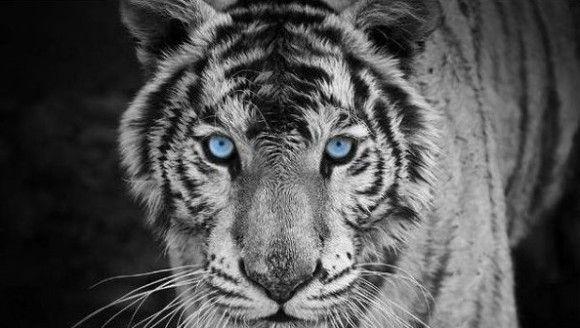 色違いの動物10