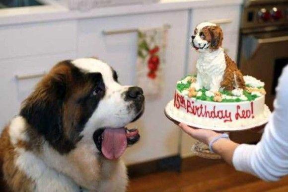 誕生日を祝ってくれるペット画像16