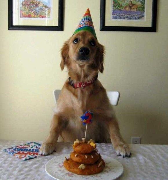 誕生日を祝ってくれるペット画像17