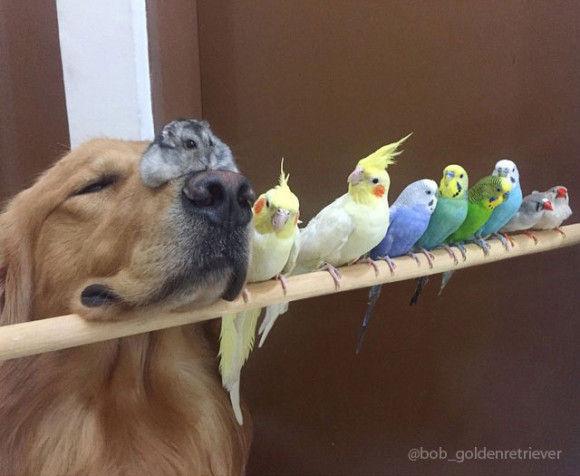 鳥と犬が友達になった結果21