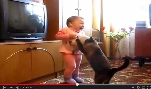 赤ちゃんから子猫を取り返そうとする親猫3