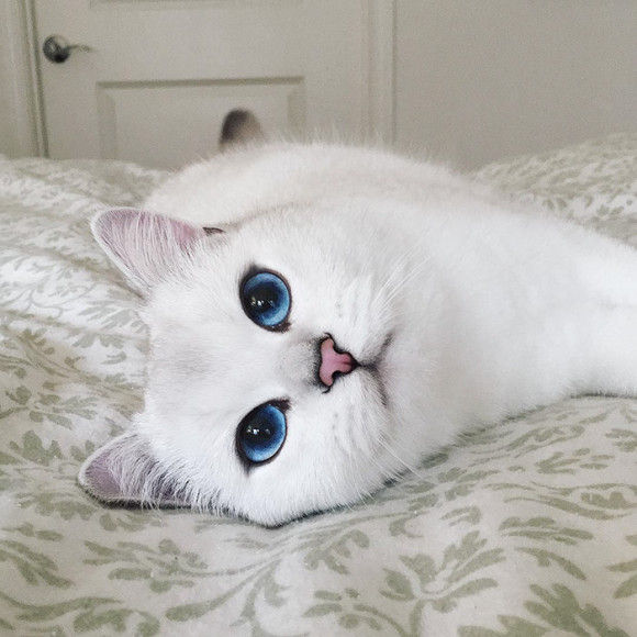 ブルーウォーターのような瞳のネコ10