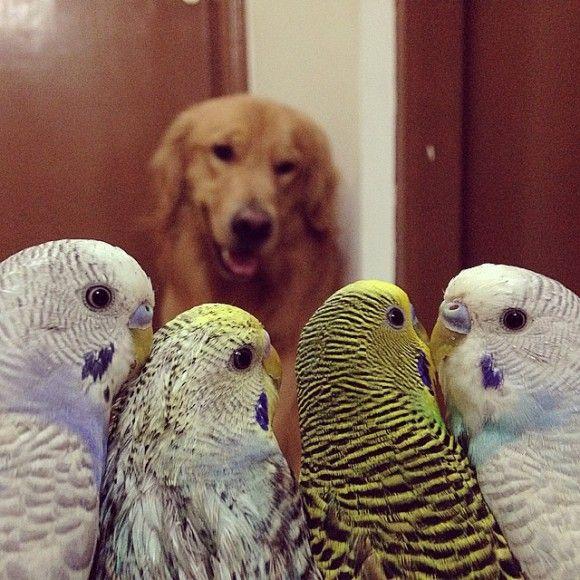 鳥と犬が友達になった結果7
