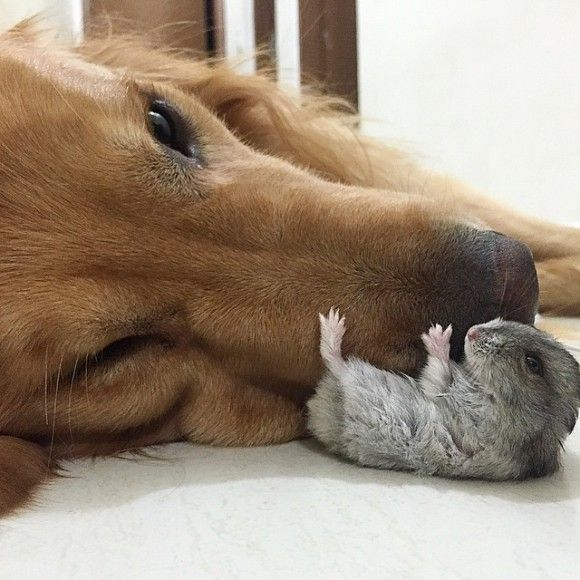 鳥と犬が友達になった結果15