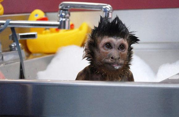 入浴中の動物2