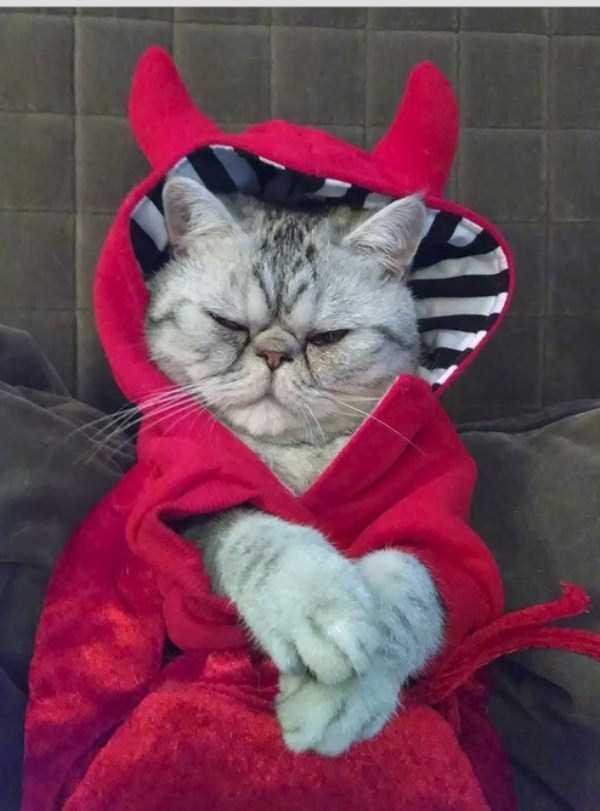 19コスチュームをした猫