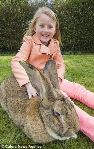 世界一大きいウサギ3