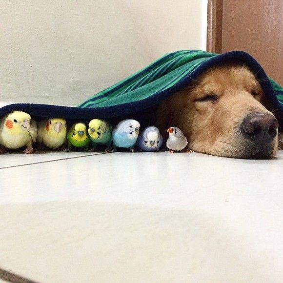 鳥と犬が友達になった結果2