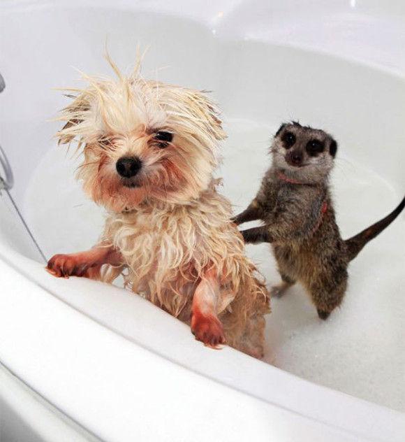 入浴中の動物8