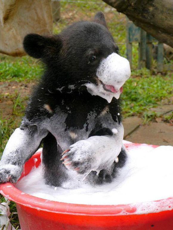入浴中の動物15