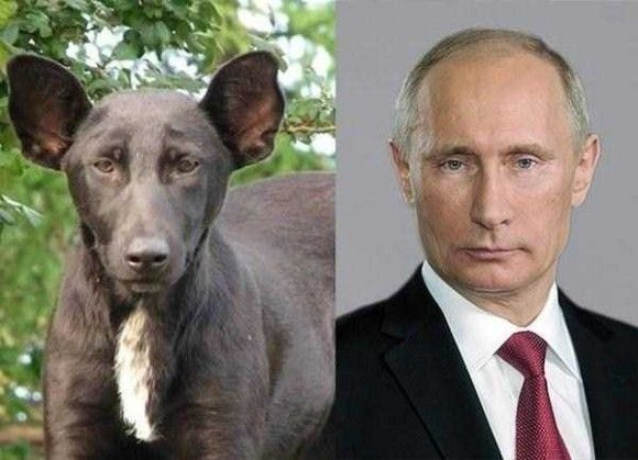 あるものに似すぎな犬20