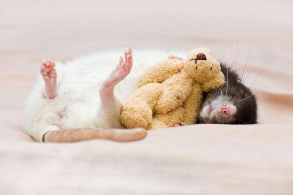 可愛らしい動物の画像10