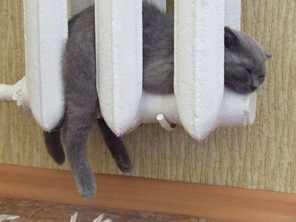 温まることが大好きネコちゃん13
