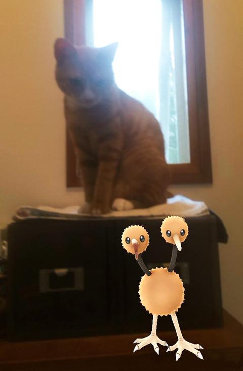 ペットはポケモンを見ることが出来る13