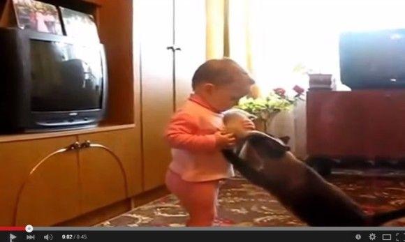 赤ちゃんから子猫を取り返そうとする親猫2