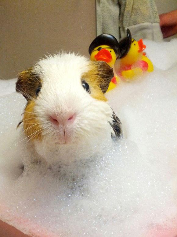 入浴中の動物7