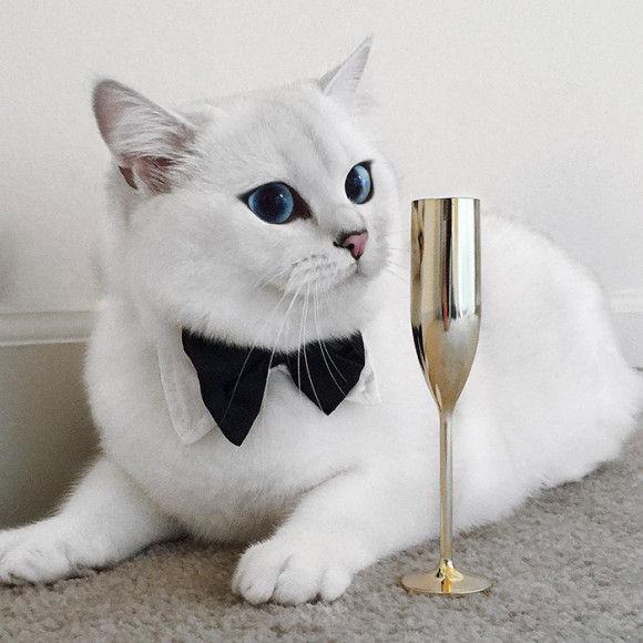 ブルーウォーターのような瞳のネコ7