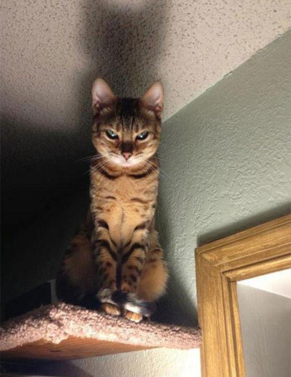 ネコに狙われている2