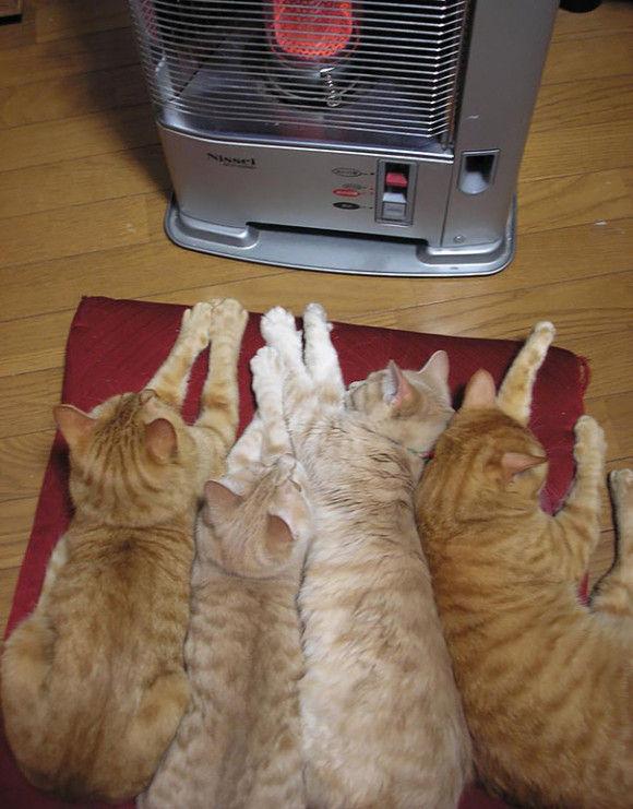 暖かい所を好む動物13