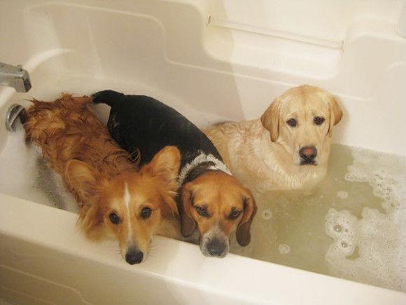 入浴中の動物11