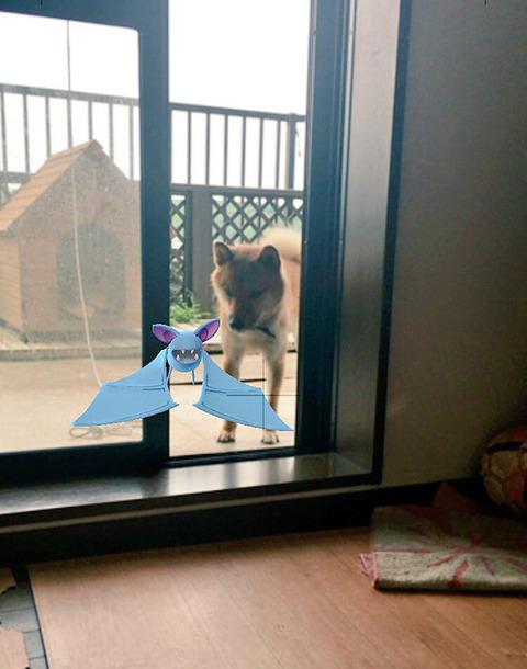 ペットはポケモンを見ることが出来る8