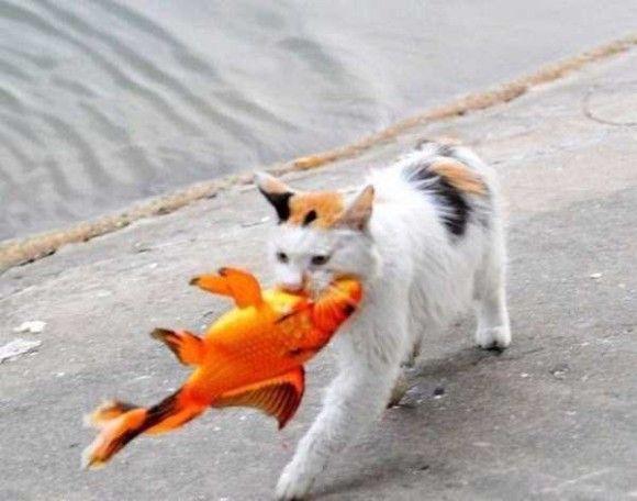 金魚VSネコ8