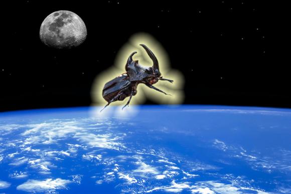 カブトムシに乗るカエル-宇宙