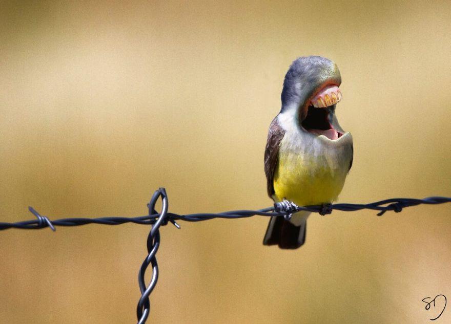 体の半分が口の鳥9