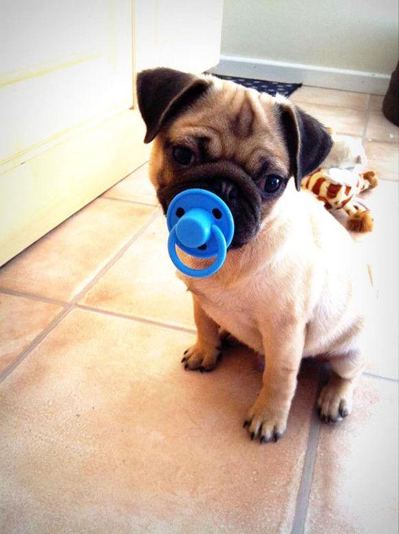 犬のおもちゃ10