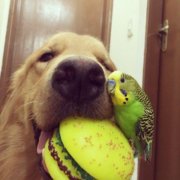 鳥と犬が友達になった結果12