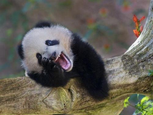 動物達の最高の笑顔13