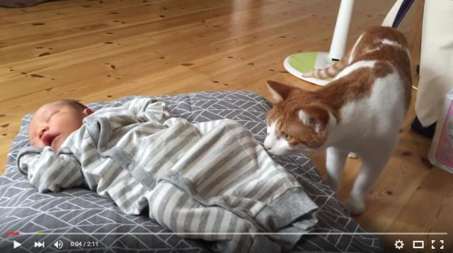 s_ネコが赤ちゃんと初対面1