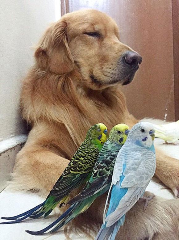 鳥と犬が友達になった結果17