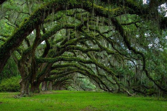 地球上でもっとも凄い木16