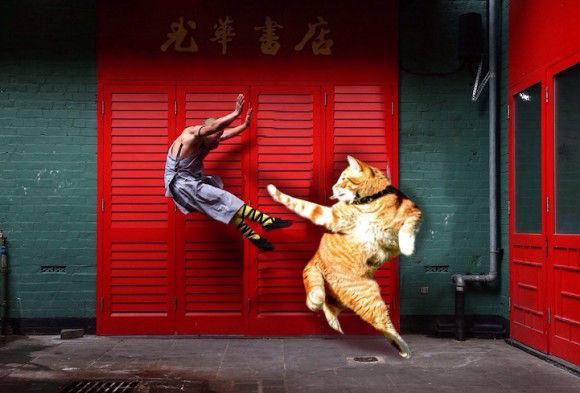 猫の画像を使ったコラ画像4