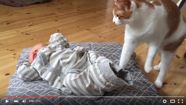 s_ネコが赤ちゃんと初対面3
