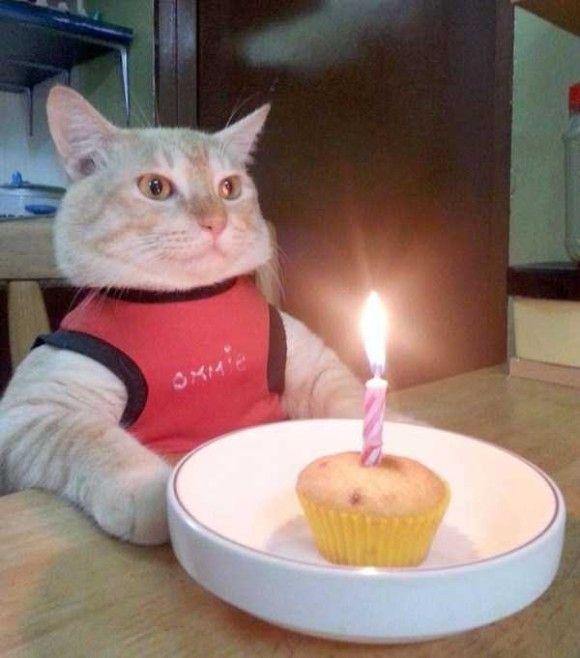 誕生日を祝ってくれるペット画像5
