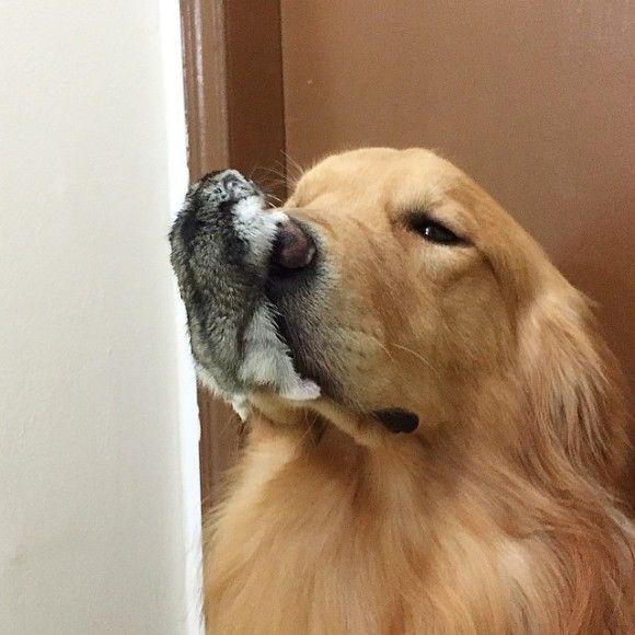 鳥と犬が友達になった結果6