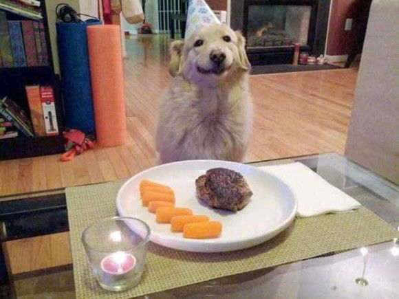 誕生日を祝ってくれるペット画像7