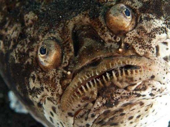 深海生物24